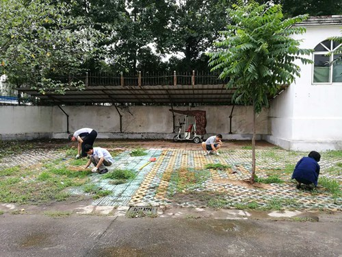 图为 市残联工作人员清除地面杂草